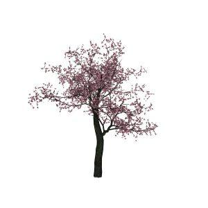 CherryTree2__by__Texelgirl-Stock (Copy)