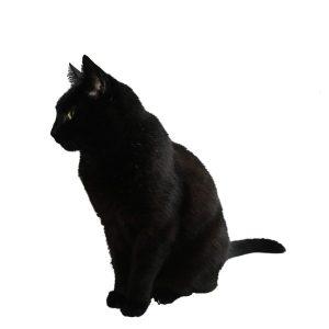 گربه32