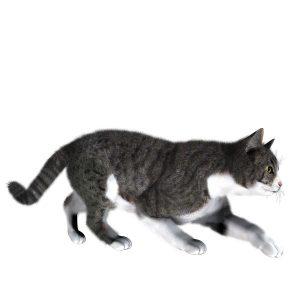 گربه34