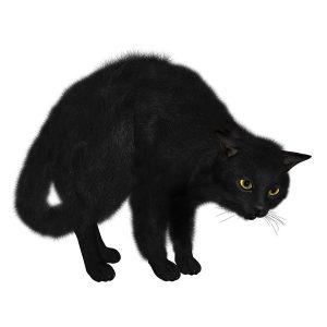 گربه35