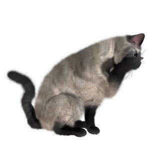 گربه37