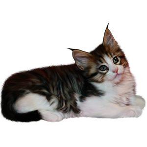 گربه42