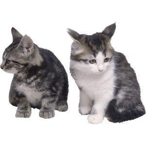 گربه43
