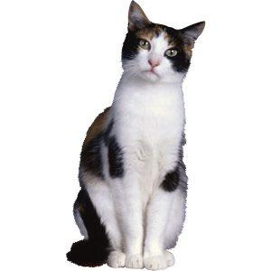 گربه44