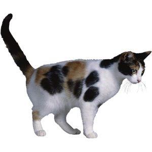 گربه45