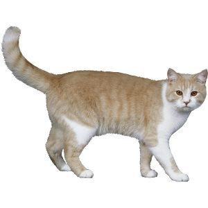 گربه46