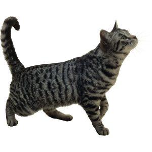 گربه48