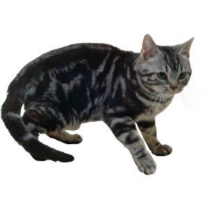 گربه50