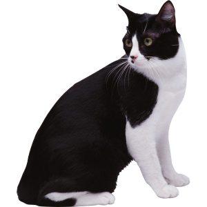 گربه51