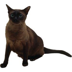 گربه17