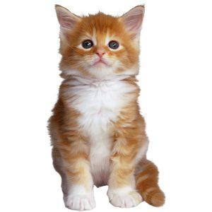 گربه54