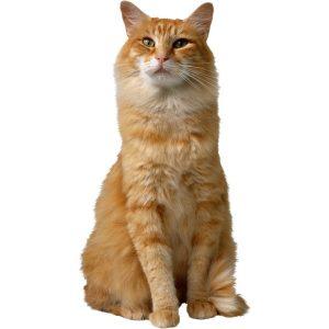 گربه55