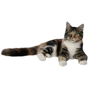 گربه56