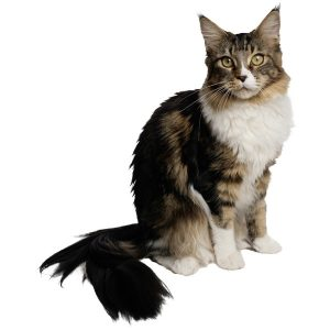 گربه57