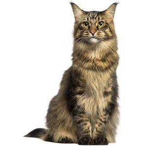 گربه28