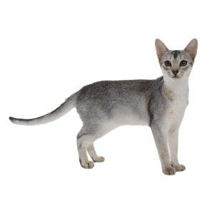 گربه29