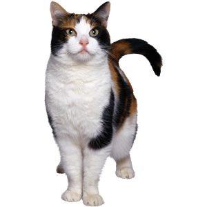 گربه30
