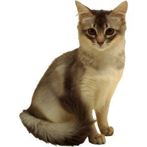 گربه7